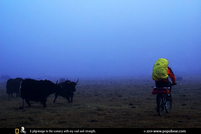 迷雾与牦牛